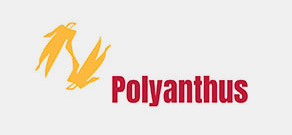 polyanthus